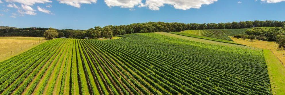australian wine region queensland 992x334 1