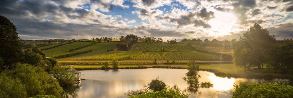 australian wine region tasmania scaled 992x334 1