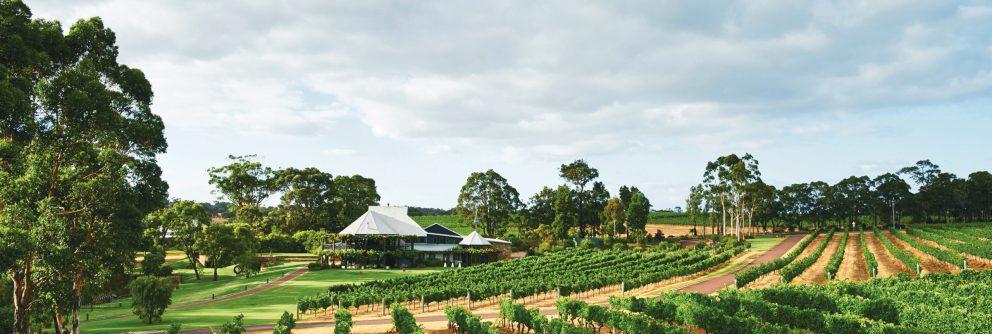 australian wine region western australian scaled 992x334 1