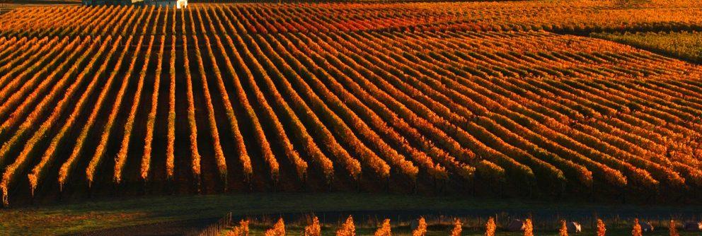 new zealand wine regions 992x334 1